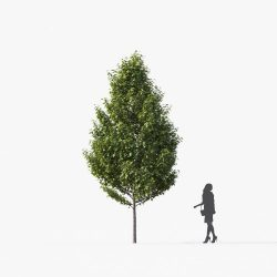 Free 3D Models DCXX | Small Tree