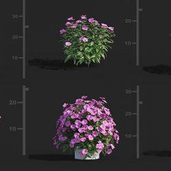 Free 3D Models DCXVIII | Plants