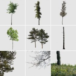 10 Free tree cutouts for post-production