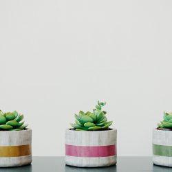 Free 3D Models DCXXI | Succulents
