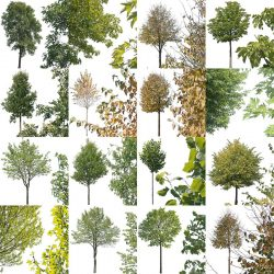 16 Free cutout trees