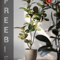 Free 3D Models DCXLII | Ficus Elastica