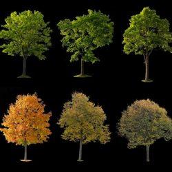 10 Free cutout trees