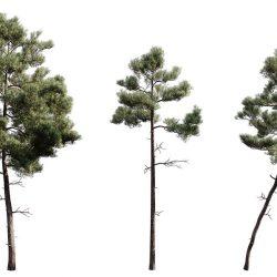 Free 3D Models DCXLVII | Pine Trees