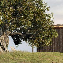 Free 3D Models | Oak Tree